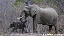 BdW Global Ideas Bild der Woche KW 45/2015 Elefant Simbabwe