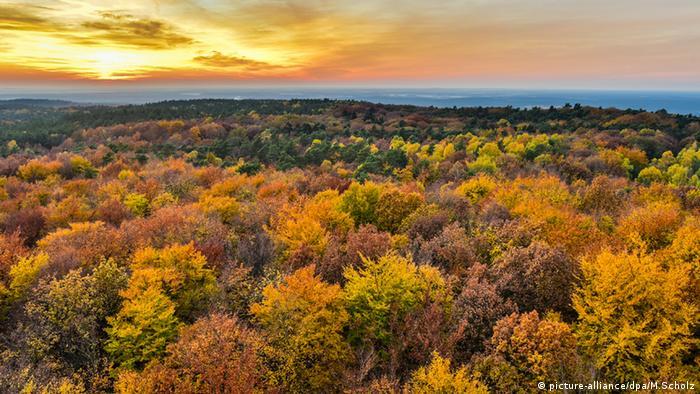 Bosque durante el otoño.