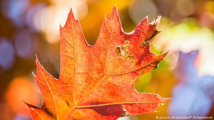 red leaf (picture-alliance/dpa/F.Rumpenhorst)