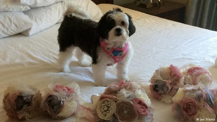 Dog Katie-Scarlett on a bed with bridal party bouquets. (Copyright: Jen Glantz)