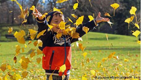 Blätter fallen vom Baum (picture-alliance/dpa/M. Bein)
