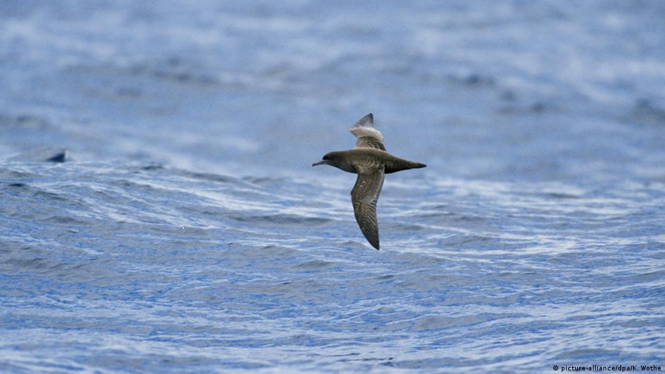 Farewell to a songbird? | Global Ideas | DW | 25 01 2018