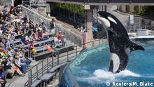 USA Orca SeaWorld in San Diego