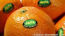 Reife Jaffa-Orangen aus Israel. Die Fruchtsorte wird auch Shamouti genannt. (Aufnahme vom 9. April 2002). +++(C) picture-alliance/dpa/P. Sakki