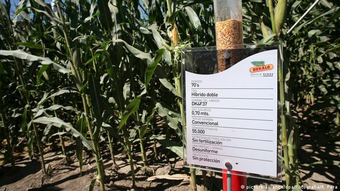Argentinien Monsanto Maisfeld