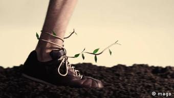 A foot in a leather shoe with a branch