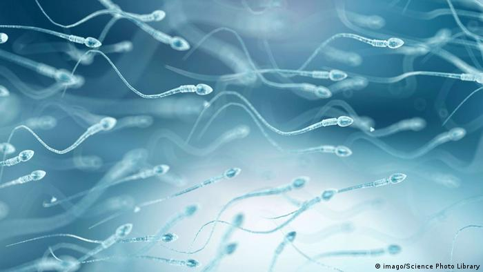 Espermatozoides sobre fundo azul
