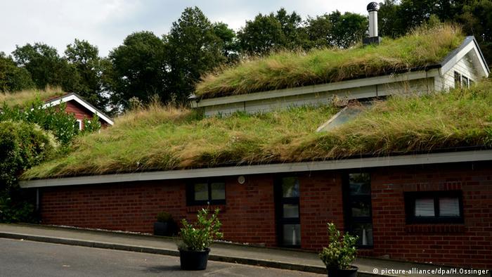 Grasdach Dachgrün Dachbegrünung Urban Gardening Ökologisches Dorf