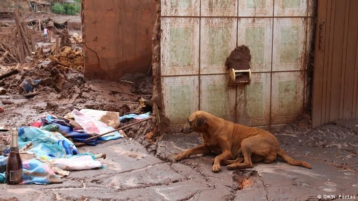 Dog by home in area affected by mining disaster (Photo: Nadia Pontes)