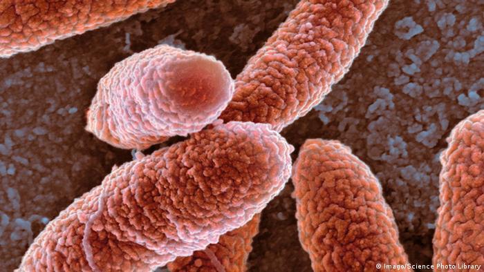 Bactérias E. coli em ilustração microscópica