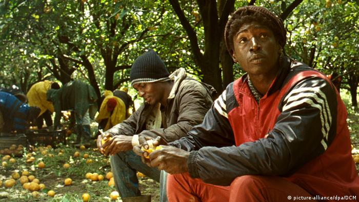 Filmstill of Mediterranea with two Africans in an olive grove (picture-alliance/dpa/DCM)