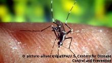 HANDOUT - ARCHIV - Eine Stechmücke «Anopheles quadrimaculatus», die Malaria übertragen kann, auf der menschlichen Haut (undatiertes Archivfoto). Der Medizin-Nobelpreis geht in diesem Jahr an drei Wissenschaftler für Therapieansätze gegen Parasiten-Krankheiten wie Malaria und Flussblindheit. Foto: EPA/U.S. Centers for Disease Control and Prevention/dpa (zu dpa:Medizin-Nobelpreis an drei Parasiten-Forscher vom 05.10.2015) +++(c) dpa - Bildfunk+++ picture-alliance/dpa/EPA/U.S. Centers for Disease Control and Prevention