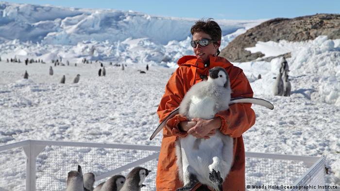 Stephanie Jenouvrier holding emperor penguin chic (Photo: Ekaterina Ovsyanikova)