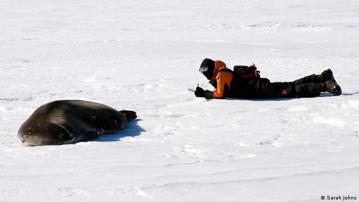 Regina Eisert with Weddell seal (Photo: Sarah Johns)