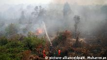 Indonesien Rimbo Panjan Waldbrände