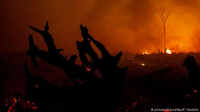 Indonesien Kalimantan Regenwald Feuer Waldbrand