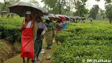 Indien West Bengal Tea Garden CPIM