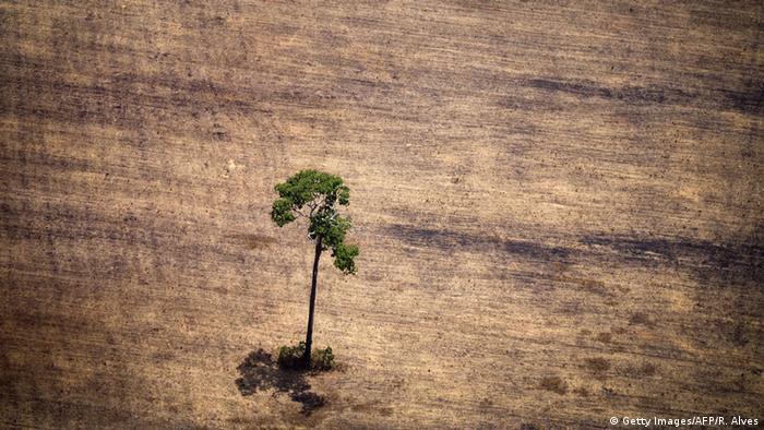 Desmatamento no estado do Pará: taxa de desmatamento está 70% acima da meta de 2020