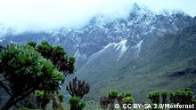 Quelle: https://en.wikipedia.org/wiki/Rwenzori_Mountains#/media/File:1172_ruwenzori.jpg Lizenz: CC BY-SA 3.0/Monfornot Fauna & Flora International www.fauna-flora.org Rwenzori Mountains