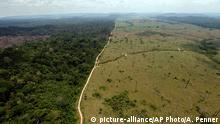 Brasilien Regenwald Abholzung CO2 Haushalt Klmawandel Grüne Lunge