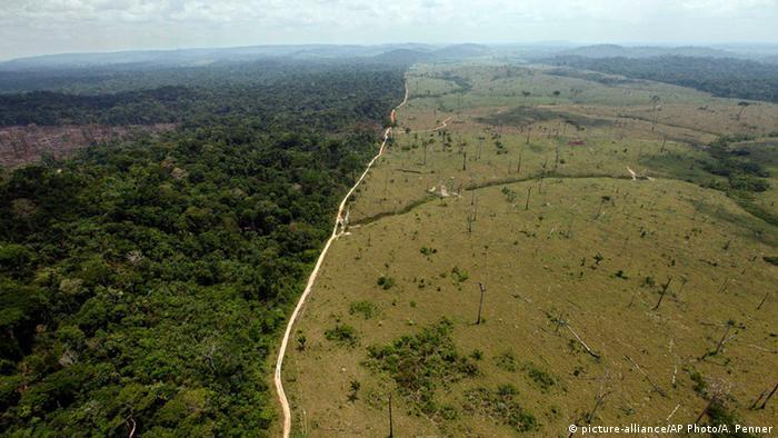 Desmatamento na Amazônia: maior fonte de emissão de gases de efeito estufa no país