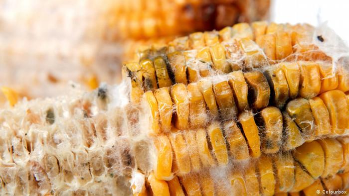 5 Penyebab Keracunan Makanan dan Tips Pencegahannya | Semua konten ...