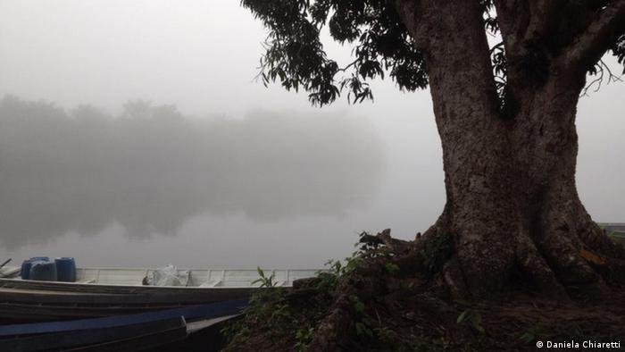 Tree in morning fog at village of Mundurukus, Cururu River in Brazil's Amazonas (Photo: Daniela Chiaretti)