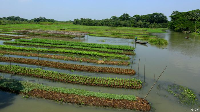 Bangladesch schwimmende Gärten