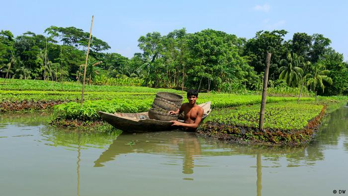 Floating gardens in Bangladesh