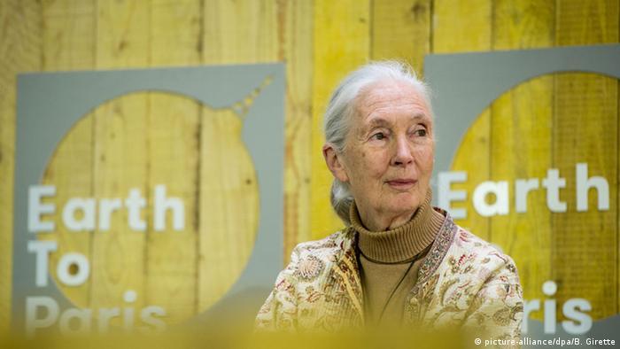 Jane Goodall bei COP21. (Foto: picture-alliance/dpa/B. Girette)