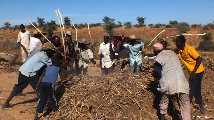 Ernte im Niger
