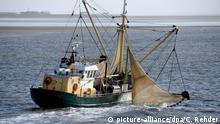 Fischfang Fischkutter