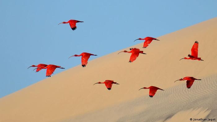 Ερασιτέχνης πουλί φωτογραφία