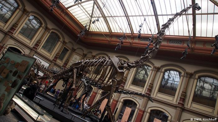 Скелет брахиозавра в Берлине