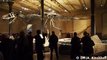 Naturkundemuseum Berlin Tristan Kopf
