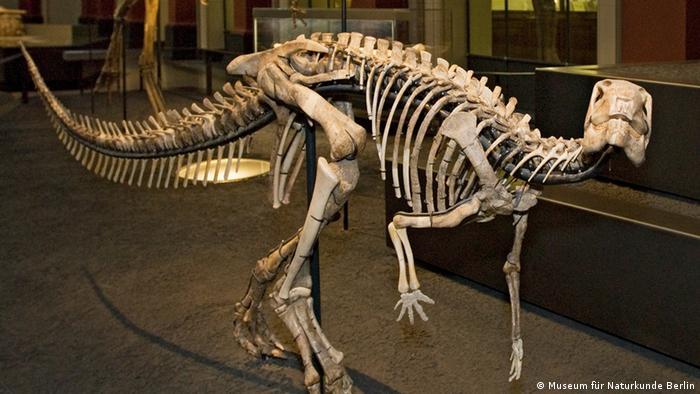 Дизалтозавр в Берлине