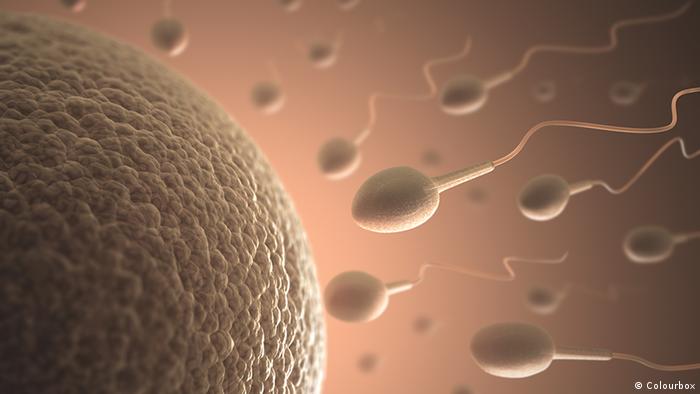 24.12.2015 DW fit und gesund Sperma Eizelle