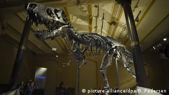 Bones of the Tyrannosaurus Rex in Berlin's Natural History Museum