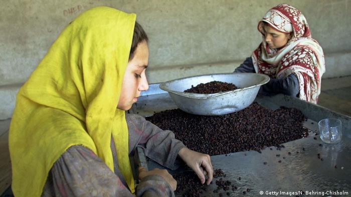 Afghanistan Kabul Rosinen Fabrik