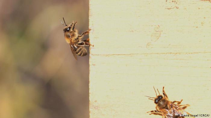 Sweetness Of Flowers Key To Calming Bees Sci Tech Dw