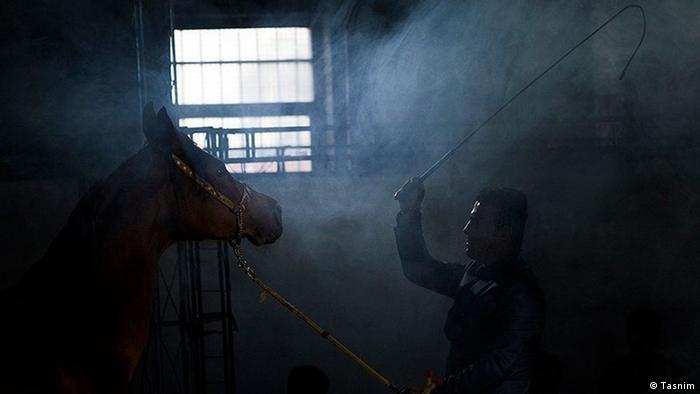 Bildergalerie Iran KW53 Pferd