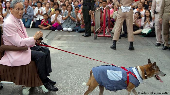 Thai King Bhumibol Adulyadej sitting on a wheelchair and accompanied by his favorite dog.