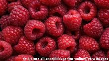 Superfood Himbeeren