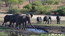 2015 Kaza im südlichen Afrika, das weltweit größte Naturschutzgebiet, erhält vom Medientraining sowie dem Afrika-Team der DW Akademie unterstützende Kommunikationsberatung; Copyright: DW/M. Wakili***ACHTUNG: Verwendung nur zur Berichterstattung über dieses Projekt***