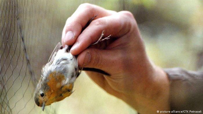 β πουλί δίχτυ