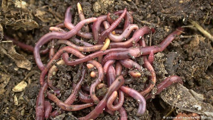 Ein Haufen Regenwürmer
