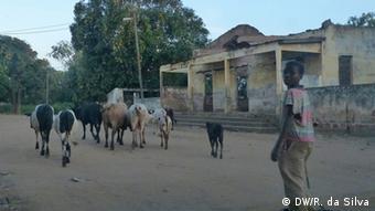 Mosambik Dürre Bauern Vieh