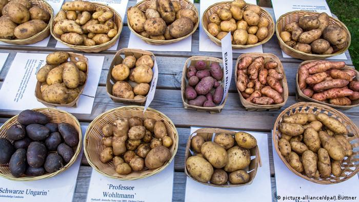 Diferentes tipos de batata.