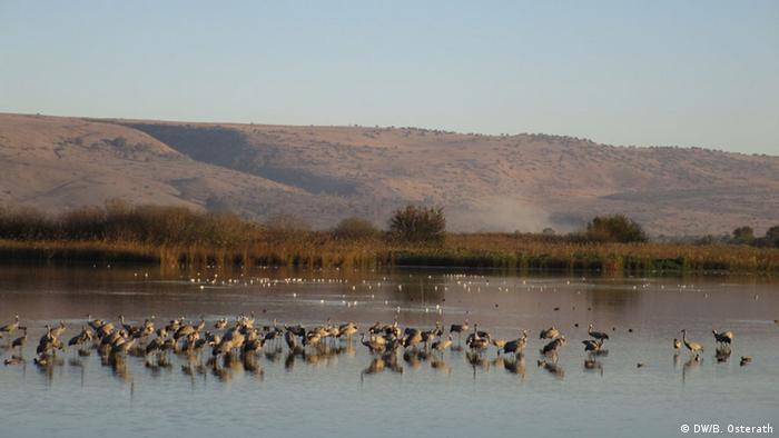 Birds in Hula Valley, Israel Photo: DW/Brigitte Osterath