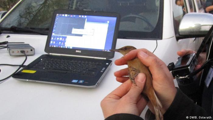 Researchers holds bird in hand Photo: DW / Brigitte Osterath